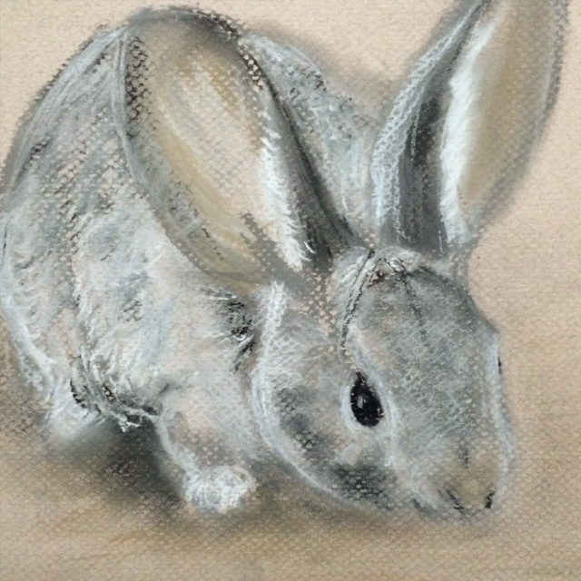 Cottontail Rabbit drawing