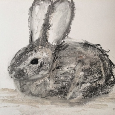 Cottontail drawing