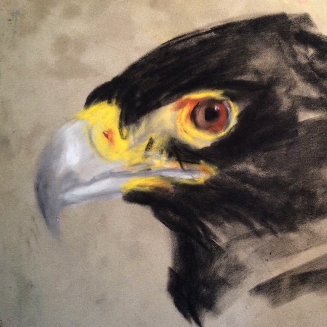 African Black Eagle drawing