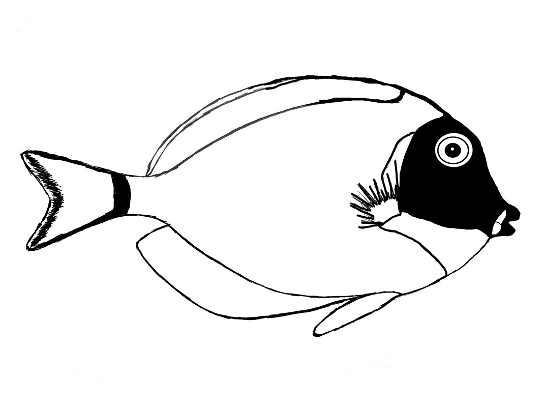 powder blue tang surgeonfish outline