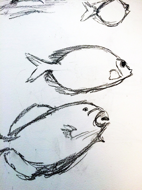 triggerfish doodles
