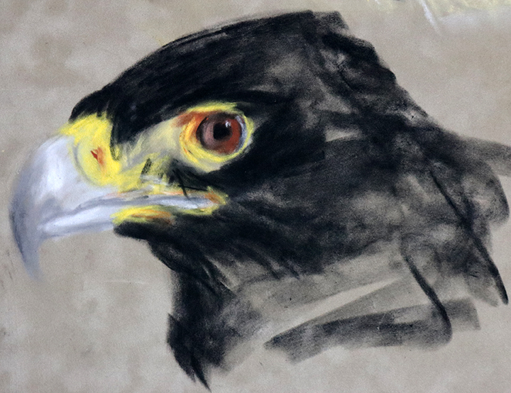 black african eagle drawing