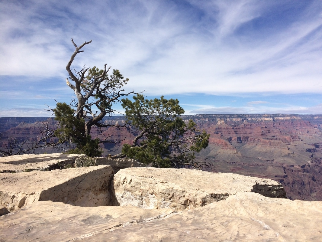 juniper at grand canyon