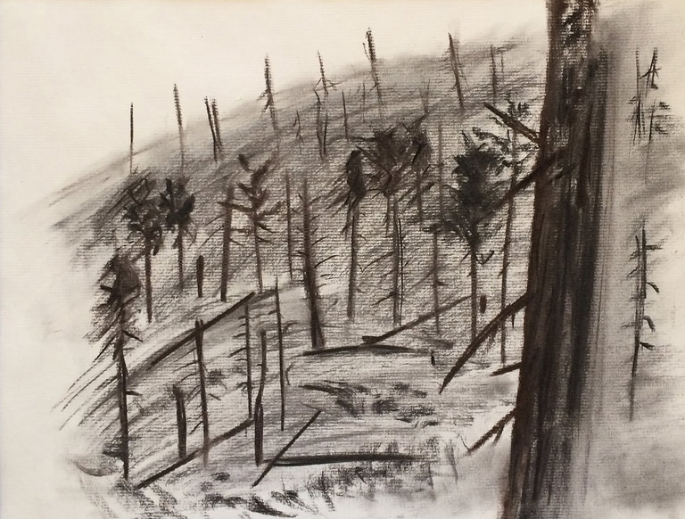 aspen wildfire drawing