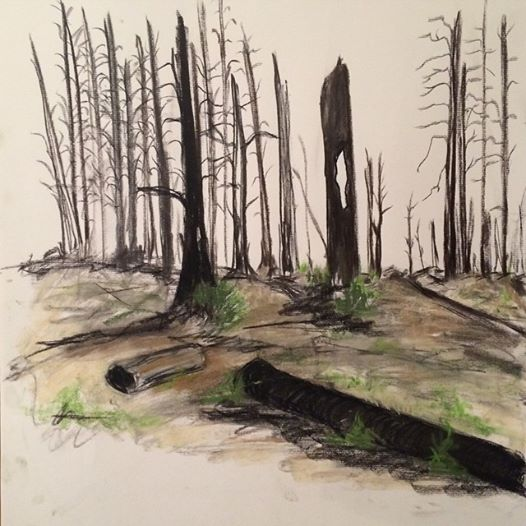 regrowth pastel charcoal drawing