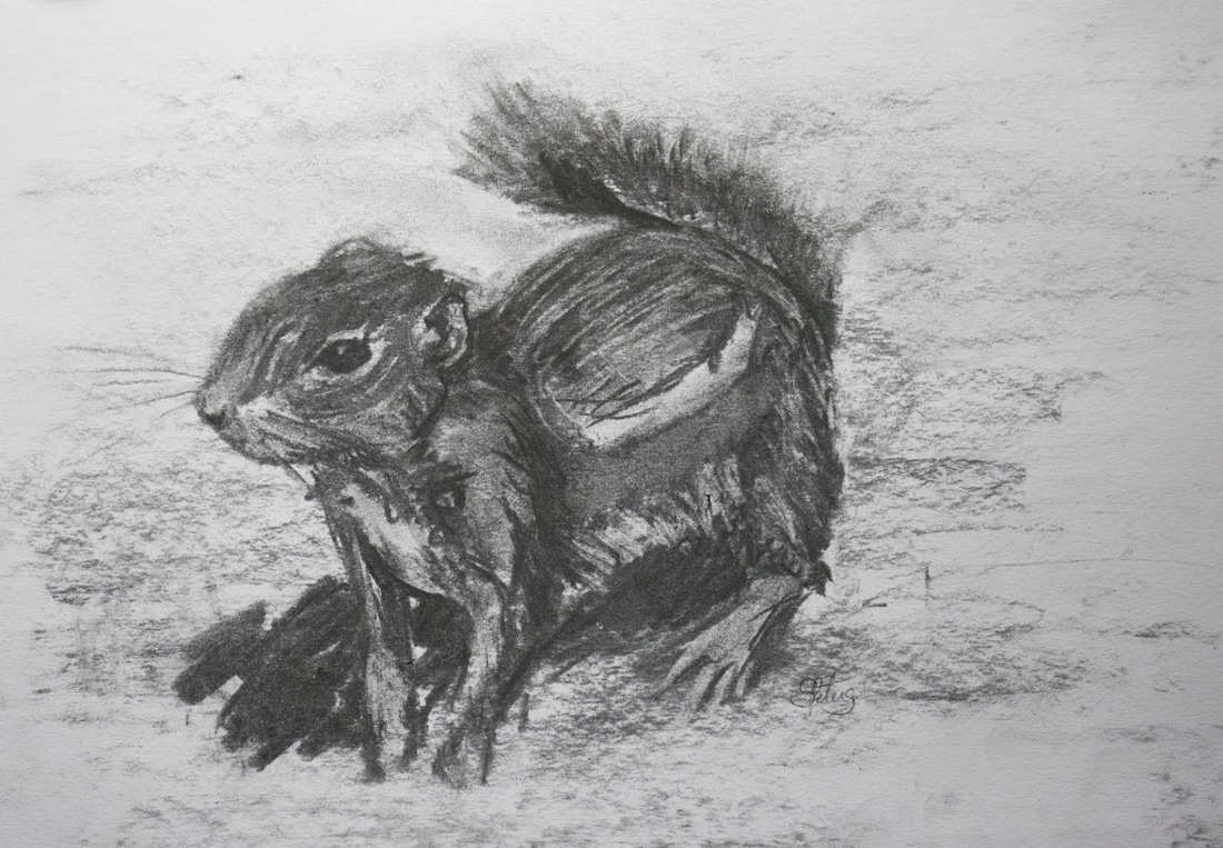 Squirrel in charcoal